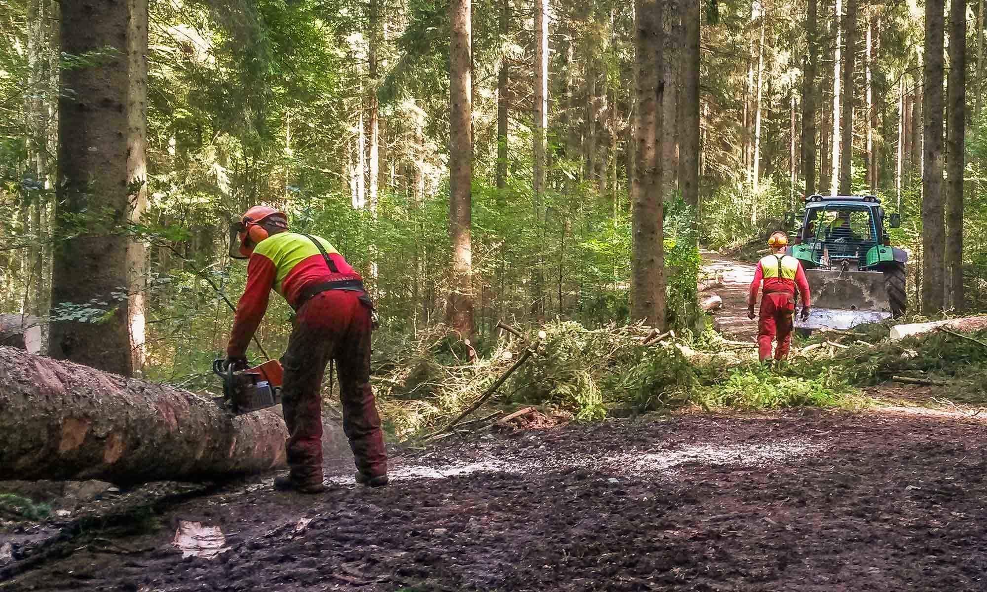 Forstbetriebsarbeiten und Betreuung durch die FBG Oberallgäu