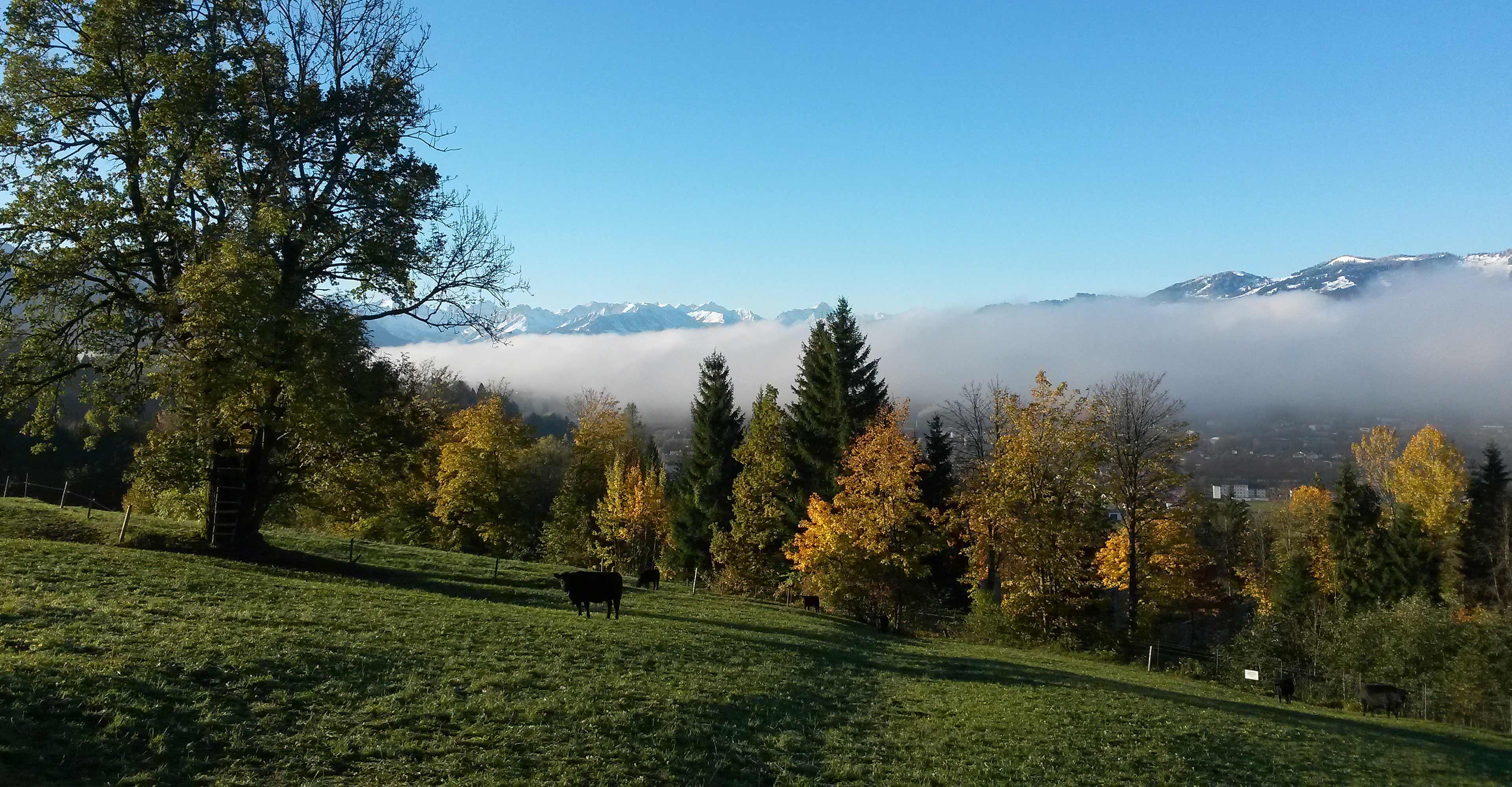 Herbstwald im Allgäu mit Nebel und Bergen
