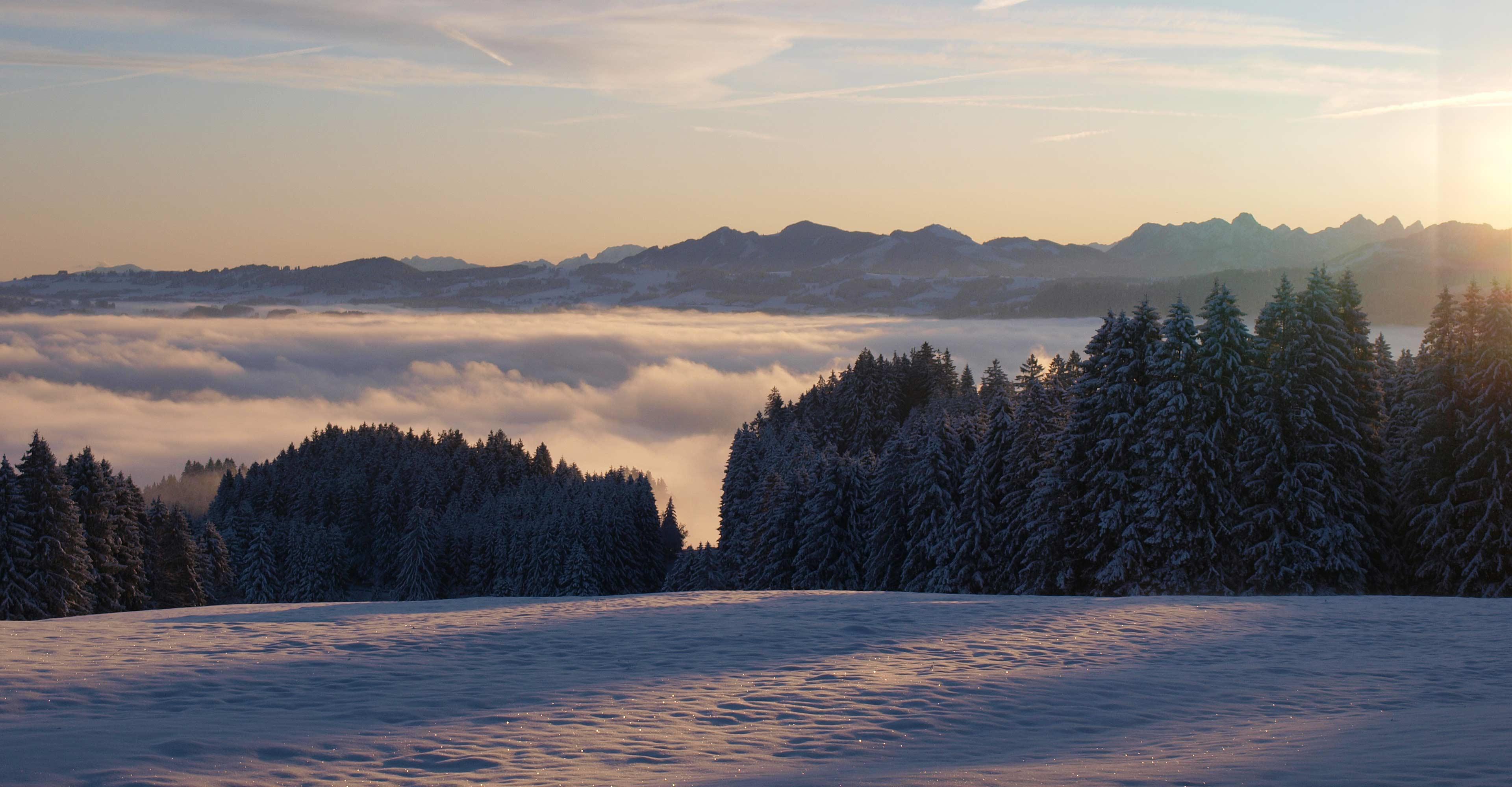 Wald mit schneebedeckten Bergen
