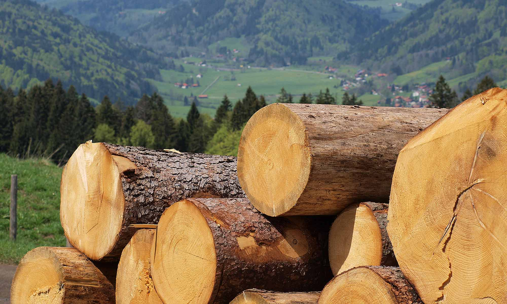 Waldbetreuung durch die FBG Oberallgäu e.V.