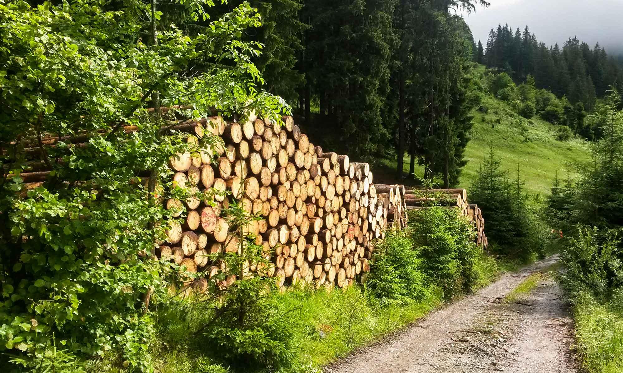 Holzvermarktung im Oberallgäu