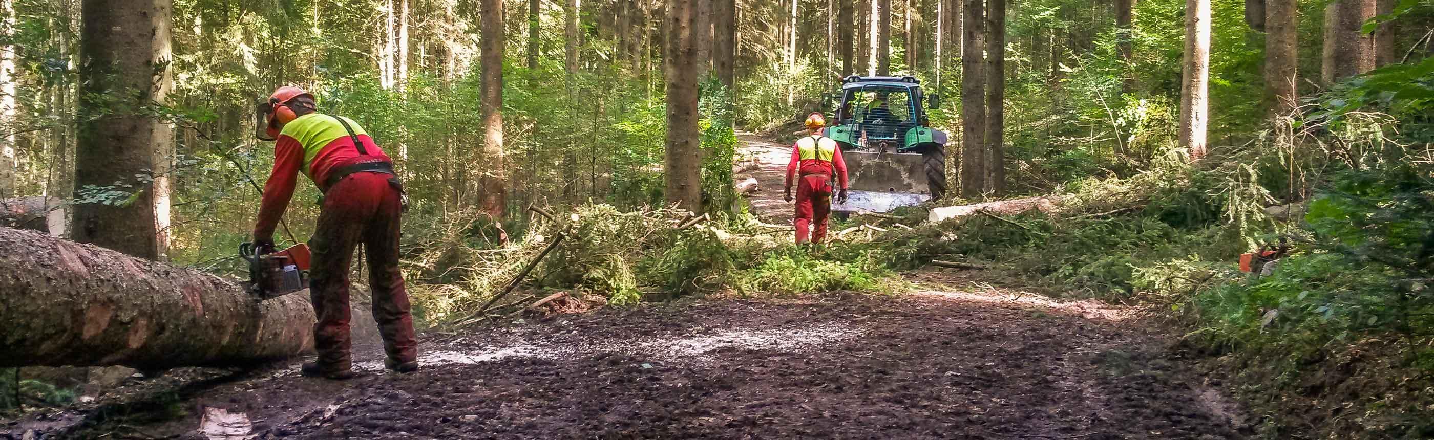 Forstarbeiten der FBG Oberallgäu
