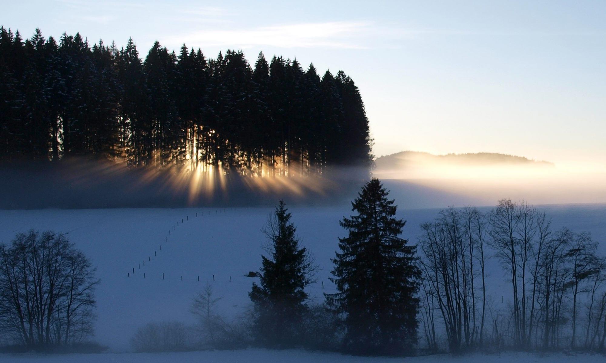 Die Forstbetriebsgemeinschaft Oberallgäu e.V. pflegt Ihren Wald