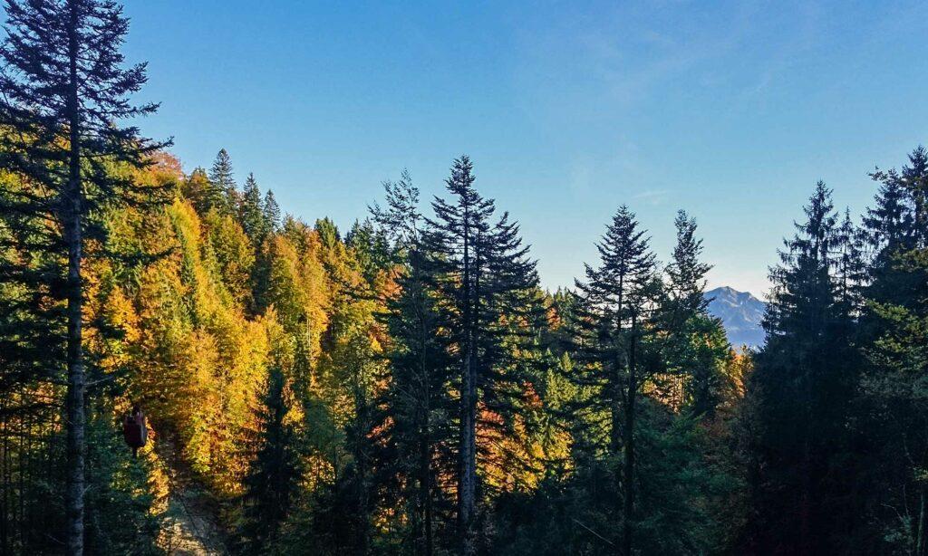 Waldverkauf