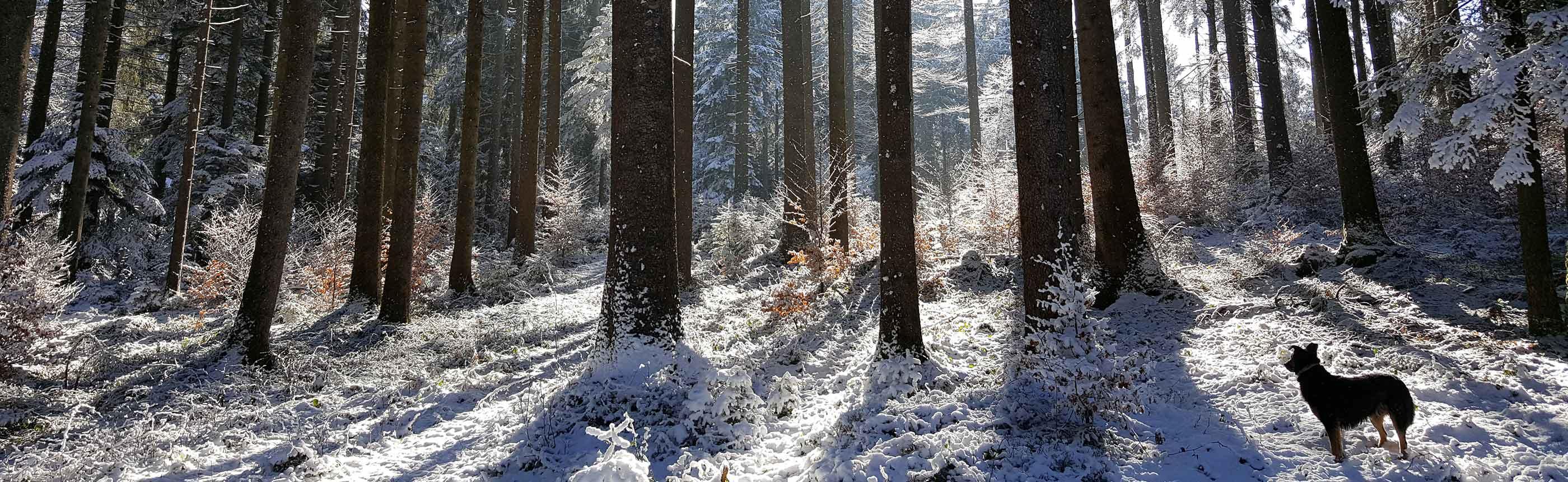 Waldbetreuung, Pflege und Wartung durch die FBG Oberallgäu e.V.