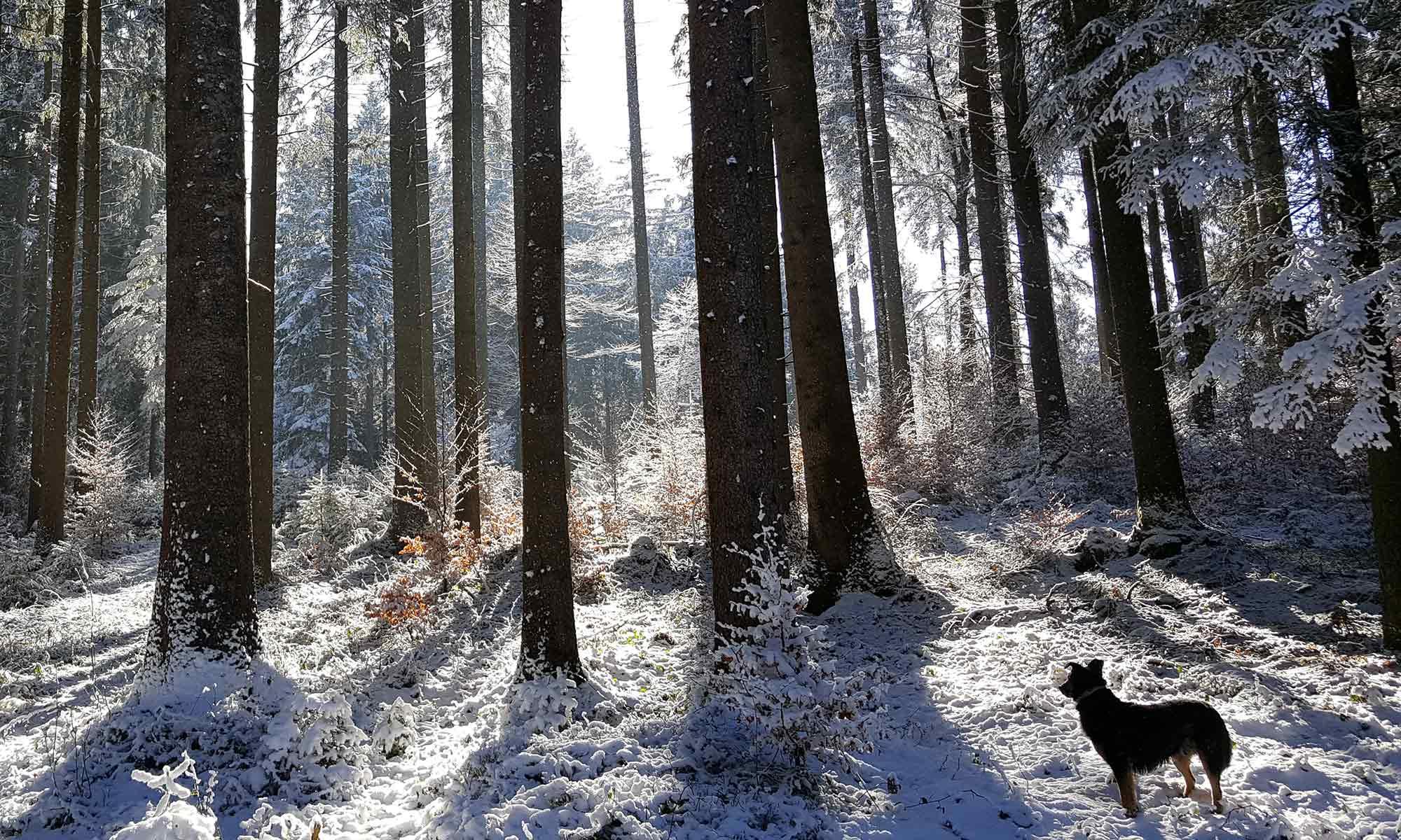 Pflege und Betreuung von Wäldern im Allgäu