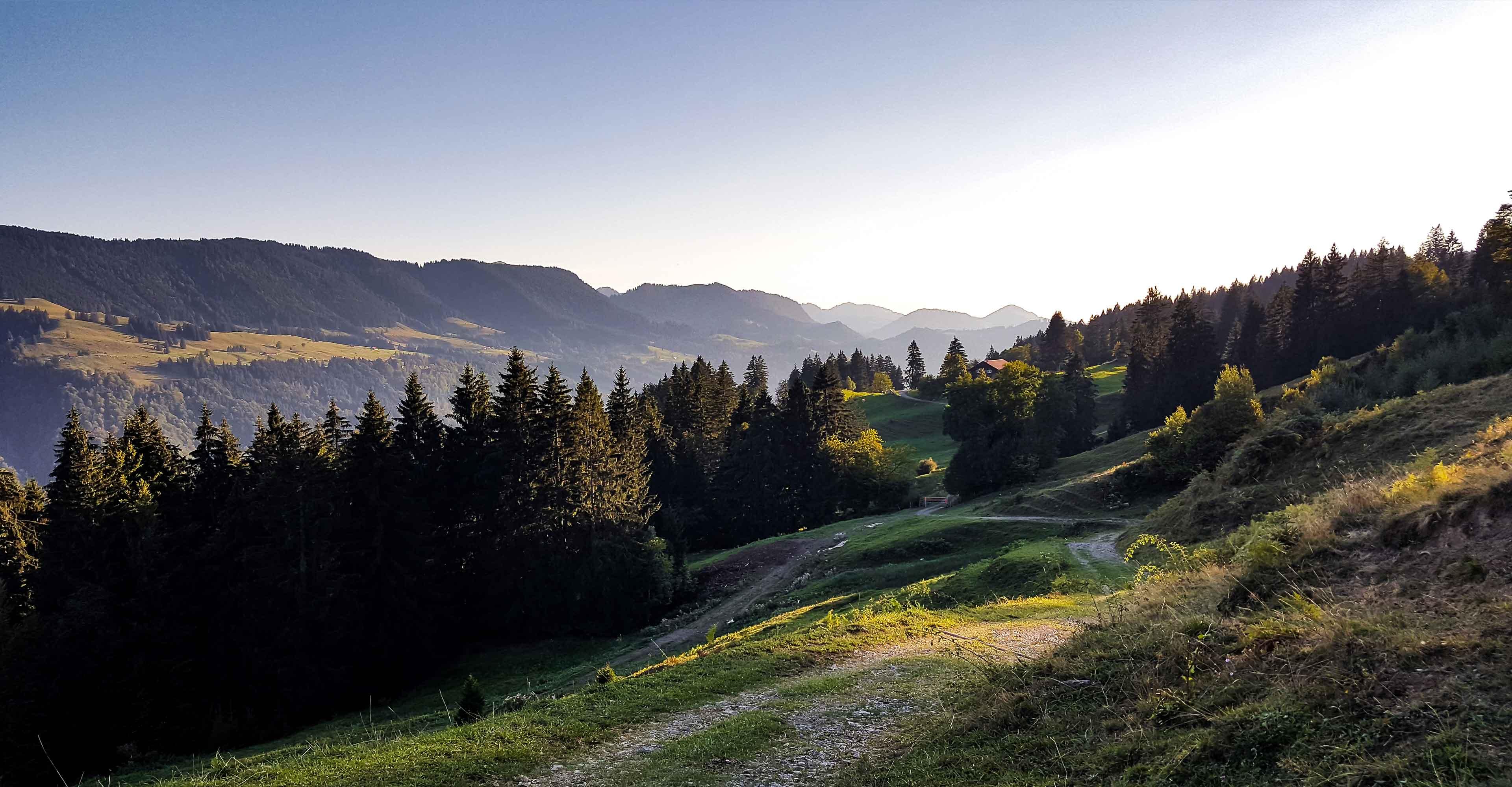 Bergwald im Oberallgäu