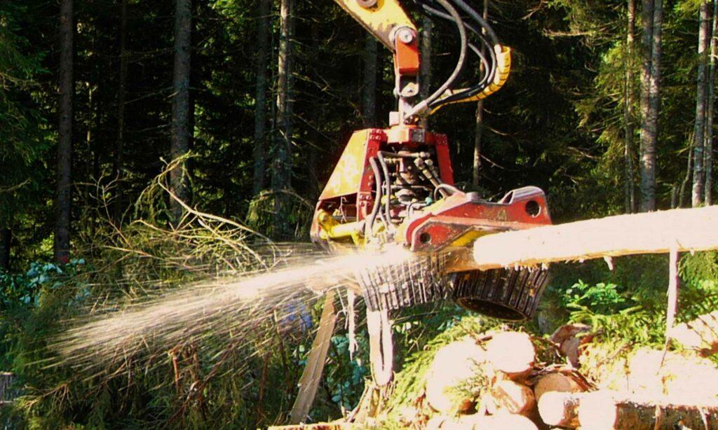 Forstdienstleistungen der FBG Oberallgäu e.V.