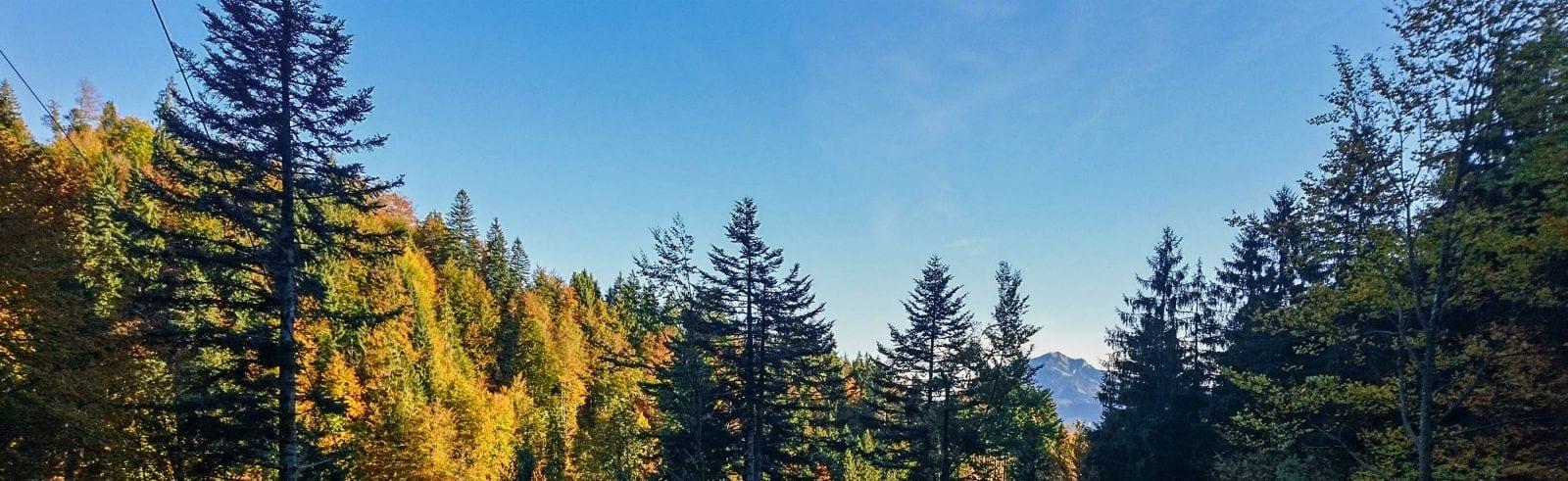 Forstgutachter Waldgutachten Oberallgäu